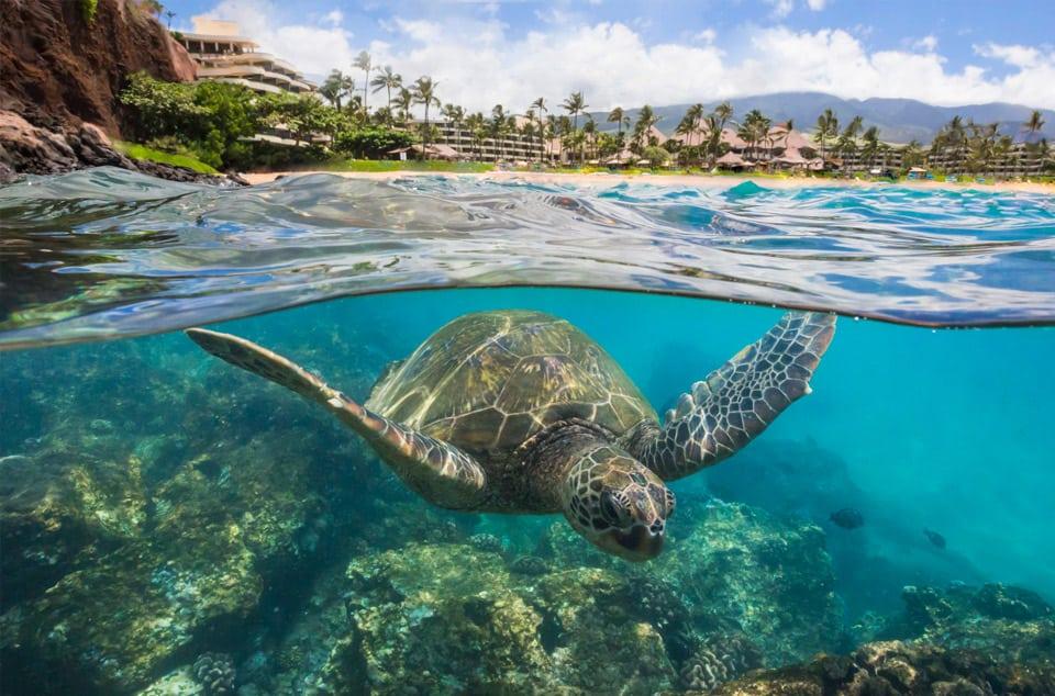 Free Honeymoon in Hawaii Giveaway