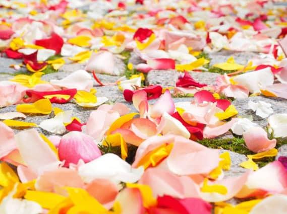 Rose Petal Ideas