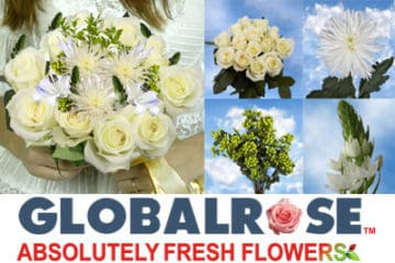 Wedding Deal from Global Rose